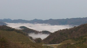 ひざくらロード雲海